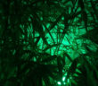 QPEM_centro-parraga-verde-chroma